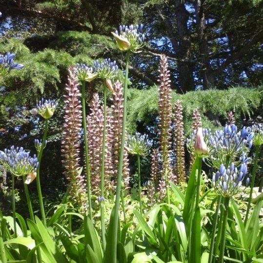 jardin de fleurs des gîtes Kerdoel
